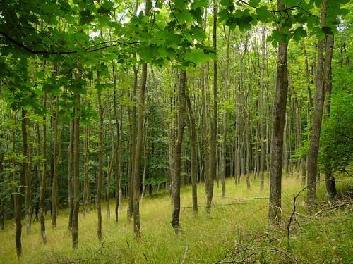 Július 1-ig igényelhető támogatás erdősítéshez
