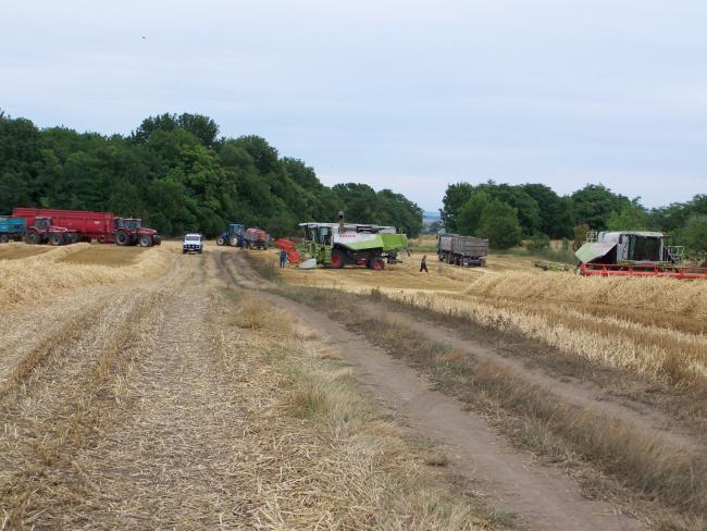 7. ábra: Az aratáshoz előkészült betakarító és szállító gépcsoport