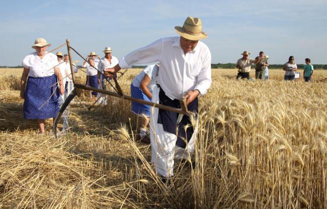 Tovább bővülhet Magyarország és Szerbia mezőgazdasági együttműködése