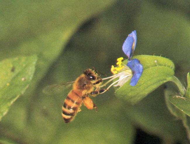 VM: vizsgálja a méhpusztulás okait az élelmiszerlánc-felügyeleti hatóság