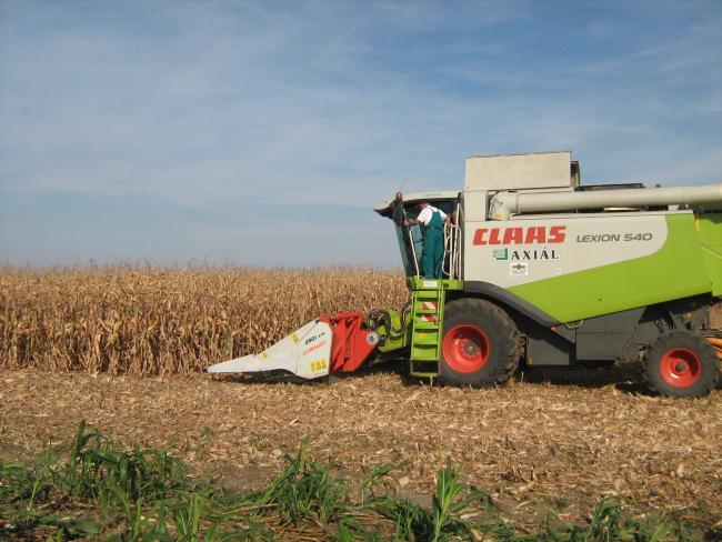 2. ábra: Szárzúzós kukorica csőtörős adapterekkel egymenetben is egyenletesen aprított és terített szármaradványokat kapunk