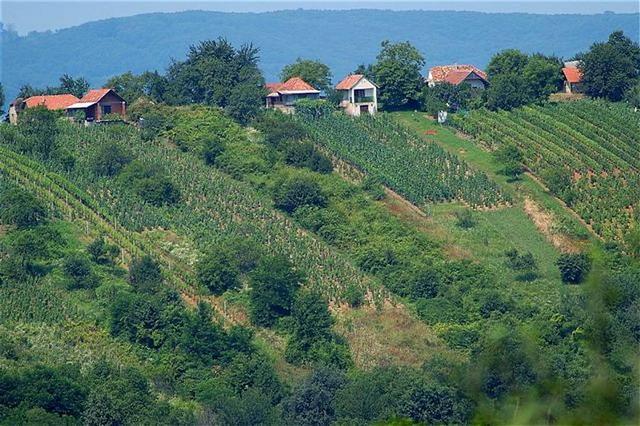 OGY - Pontosabb szabályozás a hegyközségekről szóló törvényben