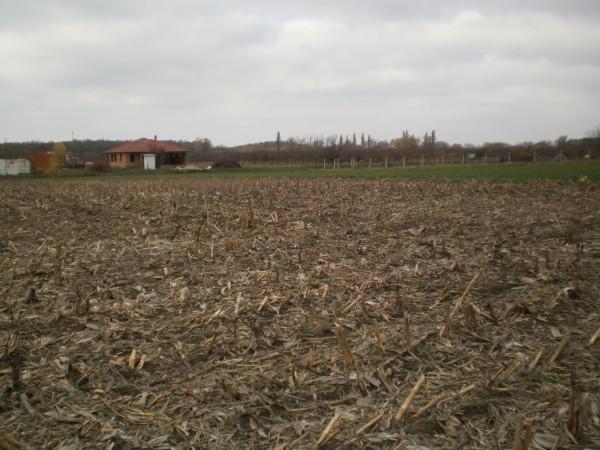Bitay Márton: év végéig 250 ezer hektár föld a fiatal gazdáknak