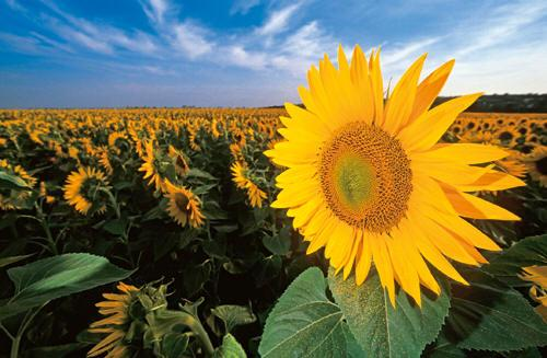 Czerván György: kiválóak őszi betakarítású növények hozamai