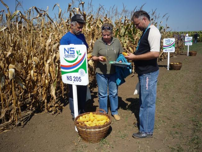 A kukorica fajtákat szemléli meg termelőkkel együtt Dóka Valéria