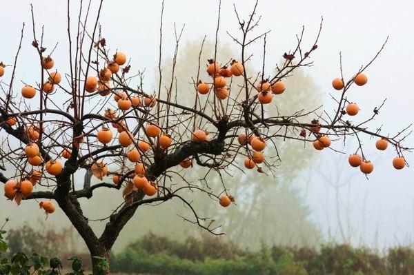 FruitVeB: a szokatlan meleg még nem károsította a gyümölcsösöket