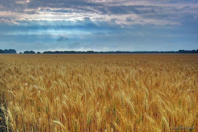 VM: sok gazdálkodó nem tartja be a földhasználatot érintő egyes új szabályokat