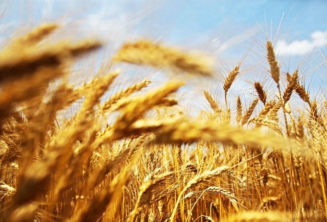 Fazekas: jelentősen fejleszthetők a magyar-kazah agrárkapcsolatok