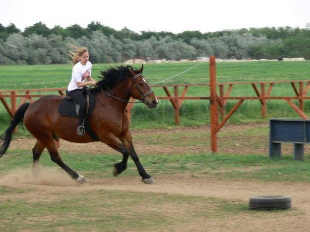 Szeptembertől 300 iskolában indulhat meg a lovaskultúra-oktatás