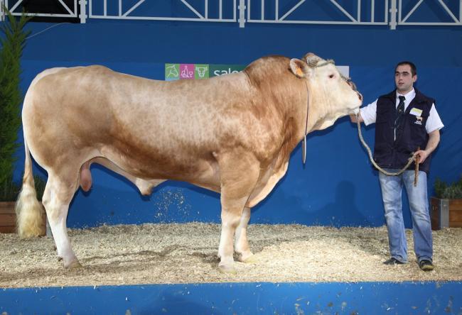 Nicolas DAYDÉ: 2006-ban vette át szüleitől a farmot, amelyet több mint 50 éve alapított a család. Jelenleg 140 ha-on gazdálkodik. Blonde d?Aquitaine törzstenyészete 115 tehénből és szaporulatából áll. Embrió mosással és beültetéssel is foglalkoznak. A bikák közül a legjobbakat tenyészbikaként, a többit hízómarhaként értékesítik, az üszők nagy részét utánpótlásnak meghagyják, a többit tenyészállatként értékesítik. A selejt teheneket meghizlalva adják el a vágóhídnak. Show bíróként több regionális kiállításon szerzett tapasztalatot.