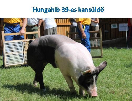 Hungahib 39-es kansüldő