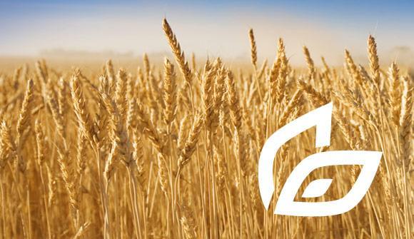 Innováció és tudástranszfer a fenntartható élelmiszertermelésért