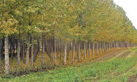 MVH: biztosítási díjtámogatást és erdősítési támogatást kaptak a gazdák
