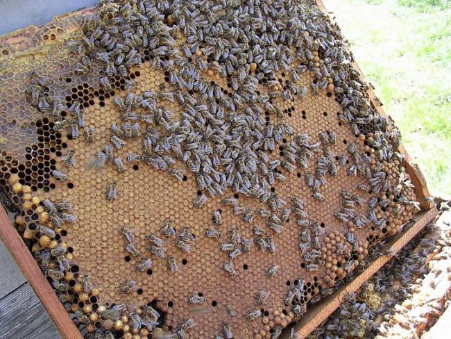 MVH: megkezdődött a méhészeti támogatások kifizetése