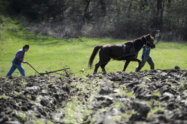 Kisbárkány, 2014. március 28. Sánta Dávid (hátul) és segítője Kisbárkány határában 2014. március 28-án bemutatja hogyan kell lóval szántani. A Cserhát Natúrpark Közhasznú Alapítvány szervezte a bemutatót a hagyományos gazdálkodási módszerek felelevenítésére. MTI Fotó: Komka Péter
