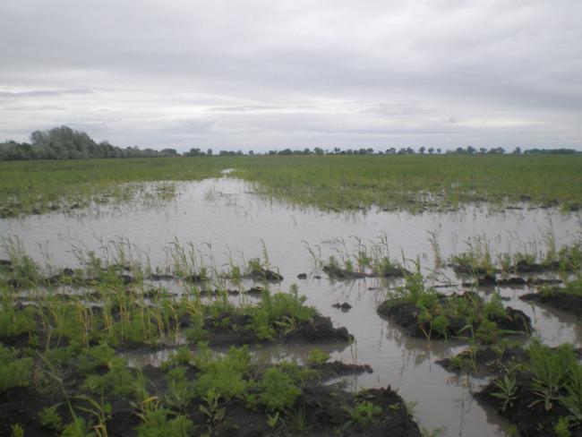 Vihar - Kárt okozott az eső és a vihar a szántóföldeken