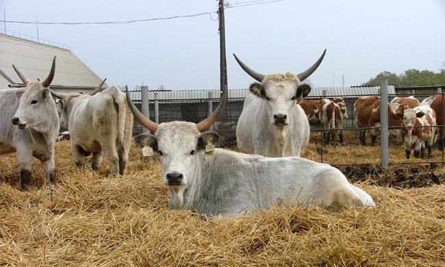 Állattartókat segítő a állategészségügyi támogatásokat fizet ki az MVH