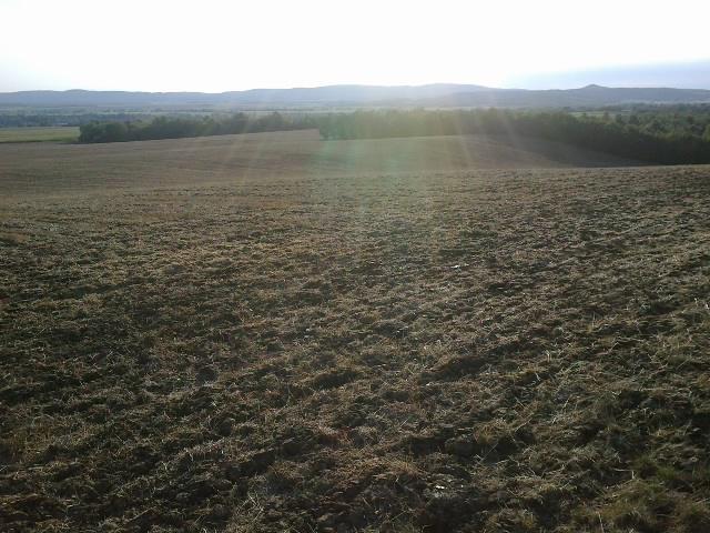 3. ábra: Közép-mélylazított gabonatarló. A gondosan aprított és elterített szalma a talaj védelmét szolgálja, 2012 (Fotó: Zsár Ernő Tamás)
