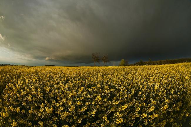 NAK: a meleg, csapadékos időjárás eltérően érintette a növényi kultúrákat