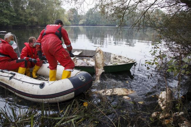 Somogyudvarhely, 2014. október 4. A somogyudvarhelyi tóban elpusztult halakat gyűjtik össze 2014. október 4-én. A helyi horgászegyesület emberei az elmúlt héten közel negyven mázsa tetemet találtak. A hatóságok vizsgálják a tömeges halpusztulás okát. MTI Fotó: Varga György