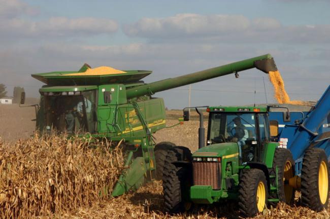 A csapadék hátráltatja a kukorica betakarítását Komárom-Esztergomban
