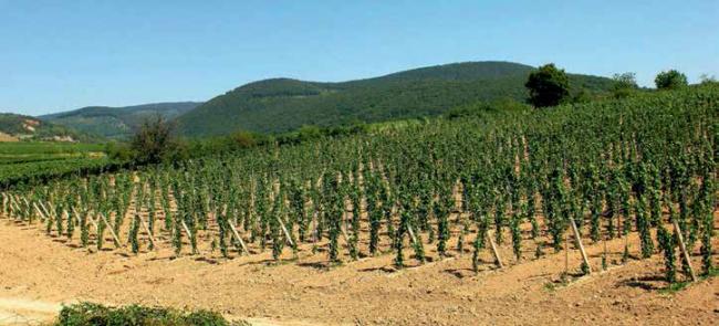 A tokaji borvidék egészére kiterjesztik a termőhely-felmérést