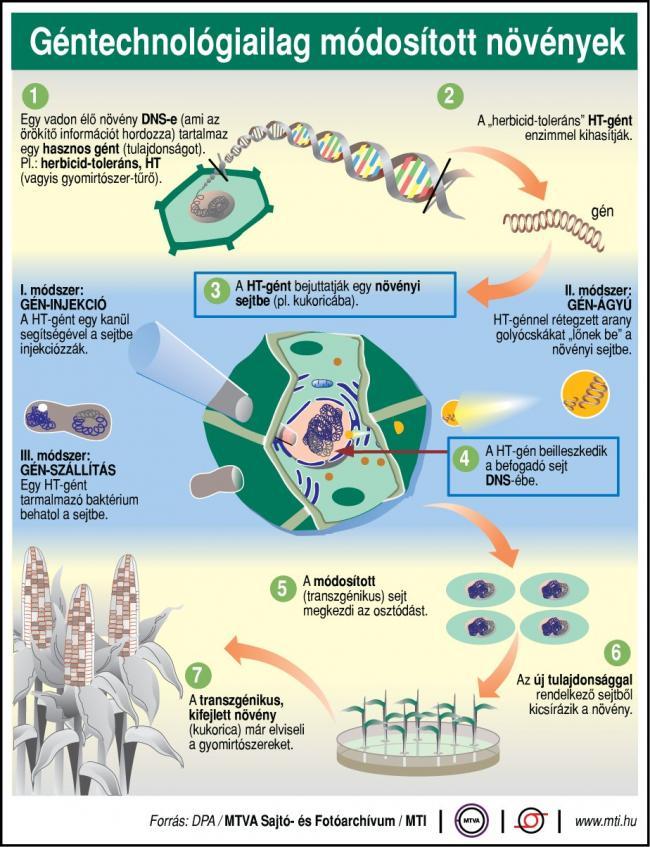 Géntechnológiailag módosított növények