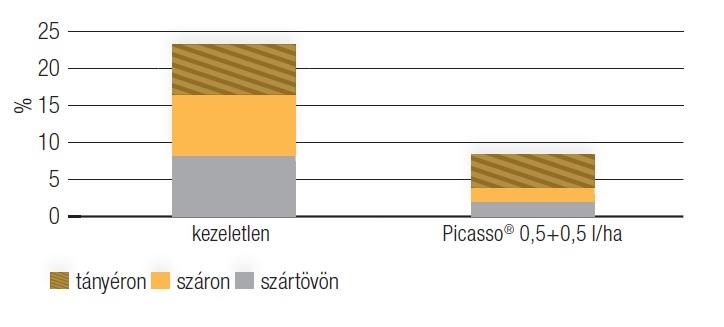 Sclerotinia fertőzési gyakoriság az egyes növényi részeken Syntech, Hódmezővásárhely, 2016. 09. 09.