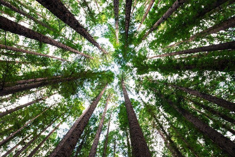 Februárban került társadalmi egyeztetésre közzétéve és a tervek szerint májustól lesz lehetőség benyújtani a Vidékfejlesztési Program keretében az Erdészeti technológiákra, valamint erdei termékek feldolgozására és piaci értékesítésére irányuló beruházásokhoz kapcsolódó pályázatot. Szeretnénk előzetesen tájékoztatni az érdeklődőket, hogy a cikk szerkesztésekor még nem a kihirdetett, végleges támogatási paraméterekről tudunk beszámolni, hanem az előzetesen véleményezésre meghirdetett tervezeti szintű felhívásról készítettünk egy rövid tájékoztató kivonatot. Felhívjuk olvasóink figyelmét, hogy módosítások következhetnek be a pályázatban, ezért majd a közzétett felhívásban leírtakat tekintsék alapul.