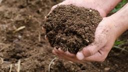 Egy szervesanyagban gazdag, morzsalékos szerkezetű és mikrobiális tevékenységben aktív talaj.