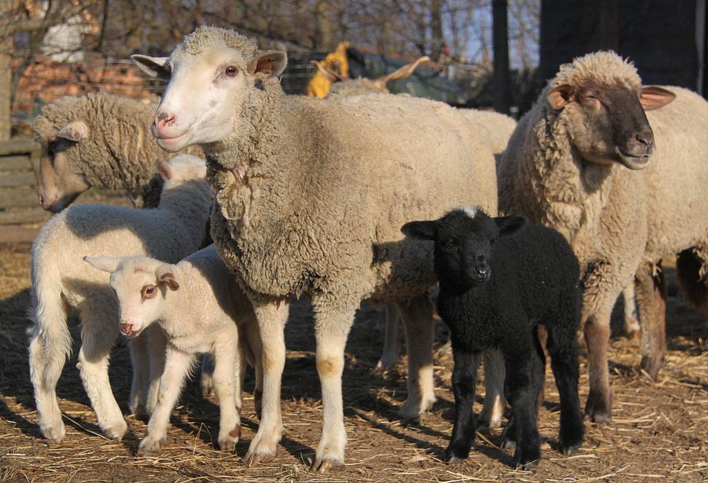 a juhok fogyásának okai a fogyás kiegészítése boldogul