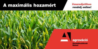 Kukorica vetéséhez is rendelhet starter mikrogranulált műtrágyát online!