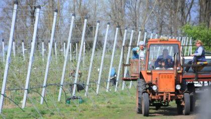 Járvány: pénzügyi segélyt a mezőgazdászoknak!
