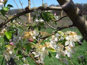 A tavaszi fagykárok megelőzésére és regenerálására – Amalgerol®