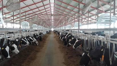 Fény és levegő: a döntő az, mit érez a tehenünk!