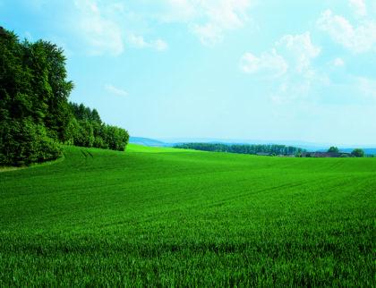 Minőségi búzát és árpát a Bayer készítményeivel