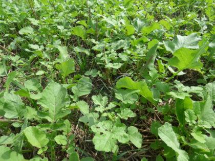 Tudatos zöldítés = jobb talajszerkezet