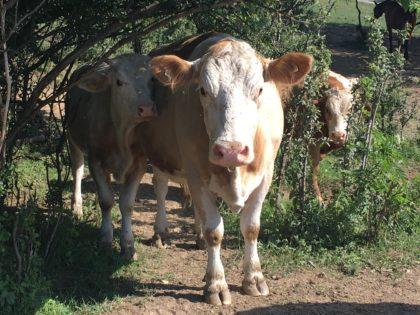 Hamarosan nyílik az állattartó telepek korszerűsítését célzó pályázati kiírás