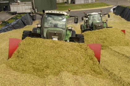 Biológiai silótartósítók kukoricához