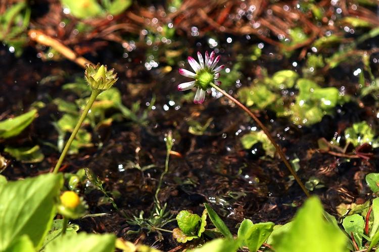 eső, növény