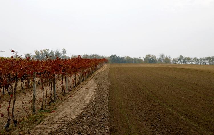magyar föld