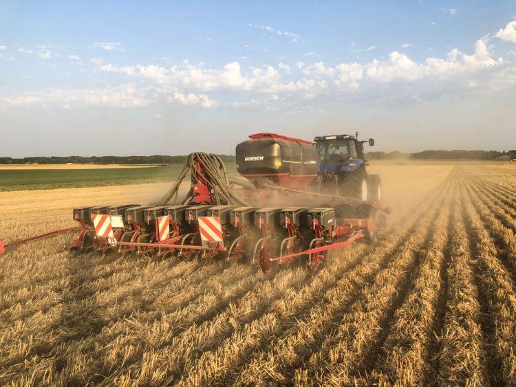 Focus 6.50 TD kukorica-másodvetés rozstarlóba
