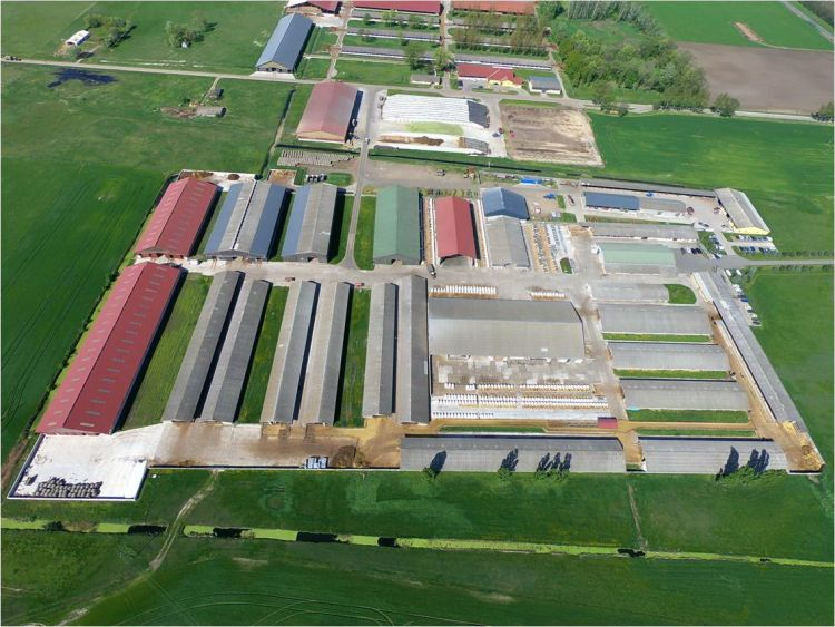 Nyakas Farm