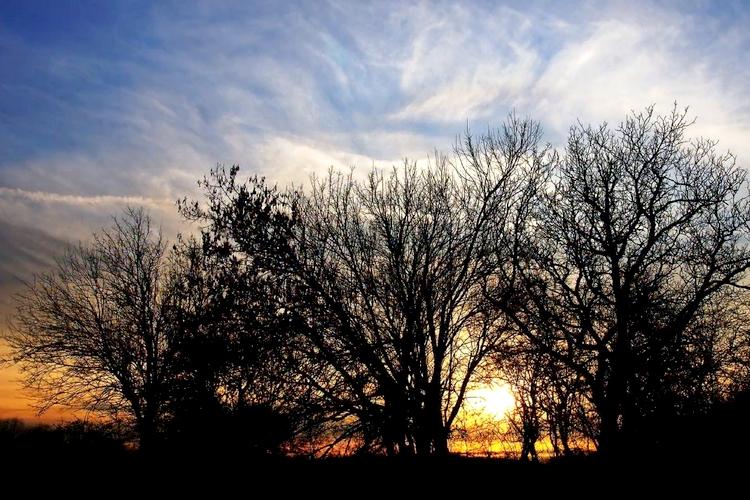 Fák naplementében