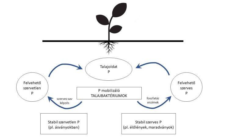 Varga Sándor – A talajtermékenység mikrobiológiai alapjai és lehetőségei