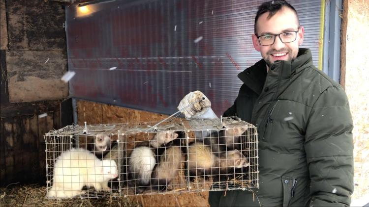 Patkányirtás méregmentesen vadászgörénnyel és kutyákkal