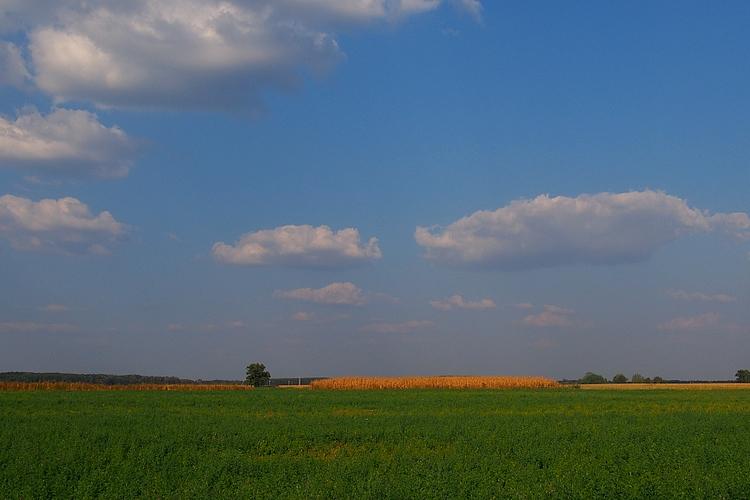 mezőgazdaság