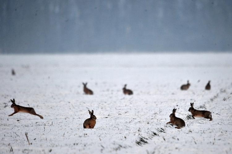 Téli mező