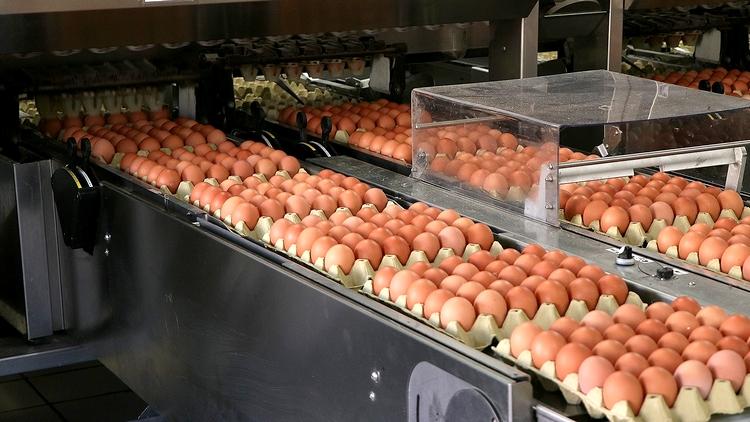 tojás válogatás