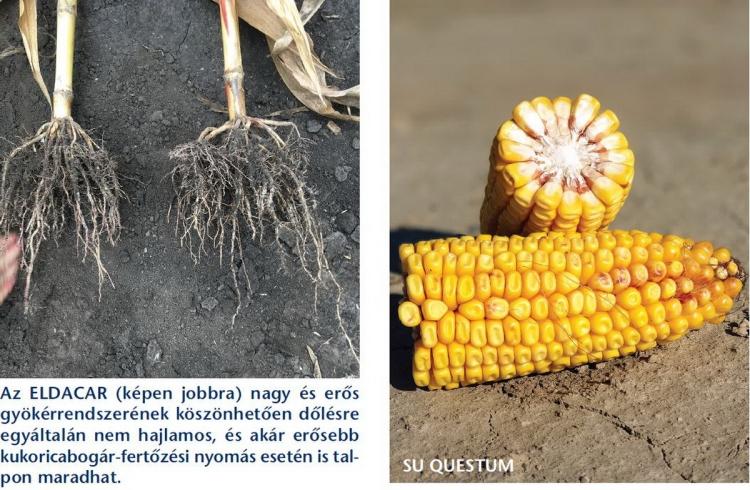 Eldacar kukorica